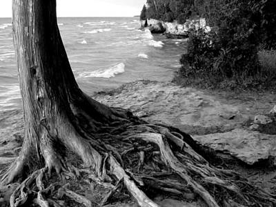 B And W Cedar Roots At Cave Point Art Print by David T Wilkinson