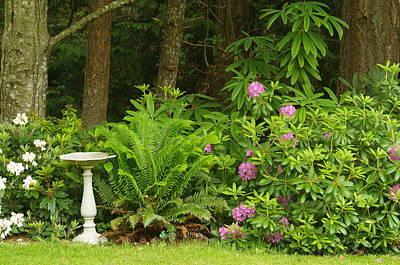 Photograph - Backyard Garden 2 by Marilyn Wilson