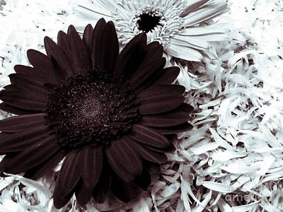 Photograph - B/w Flower by Ankeeta Bansal