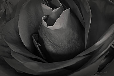 Photograph - B-w Rose by Charles Muhle