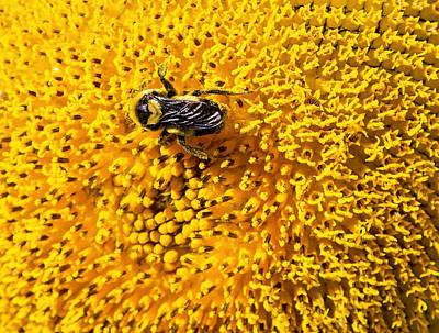 Photograph - B-z Bee by Deb Buchanan
