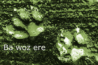 Photograph - Ba Woz Ere by Dorothy Berry-Lound