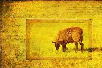 Photograph - Baabaa Black Sheep by Jan Amiss Photography