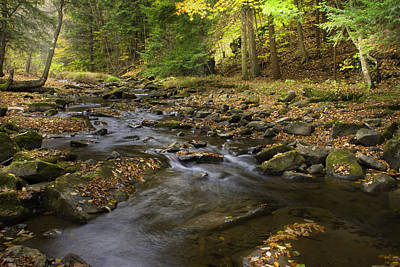 Photograph - Babbling Brook by Cindy Haggerty
