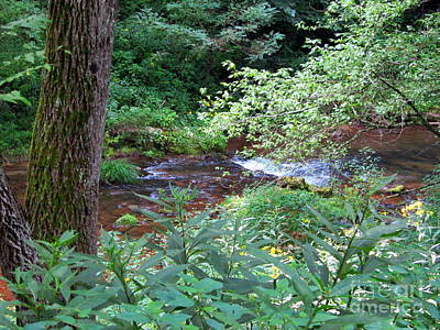 Photograph - Babbling Brook by Cynthia  Clark