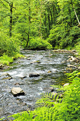 Photograph - Babbling Brook by Tom Zachman