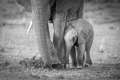 Baby Elephant Wall Art - Photograph - Baby 1 by Jeffrey C. Sink
