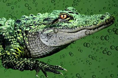 Baby Alligator Art Print