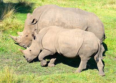 Photograph - Baby And Big Rhinoceros by Richard Bryce and Family