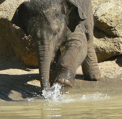Photograph - Baby Asian Elephant Playtime by Margaret Saheed