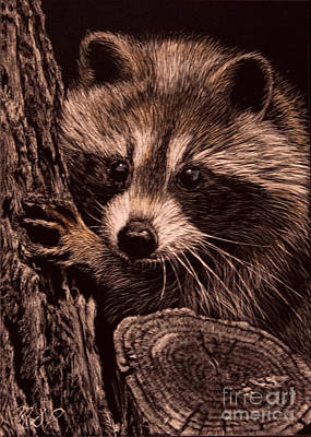 Photograph - Baby Bandit by Margaret Sarah Pardy