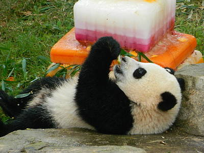 Photograph - Baby Bao Bao's First Birthday by Emmy Vickers