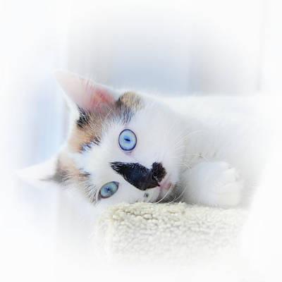 Photograph - Baby Blue Eyes by Theresa Tahara
