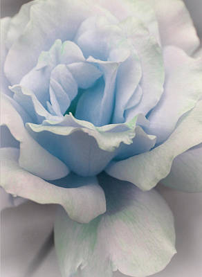 Precious Photograph - Baby Blue Love by The Art Of Marilyn Ridoutt-Greene