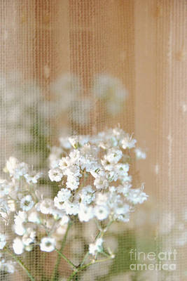 Photograph - Baby Breath- Special Day by Darla Wood
