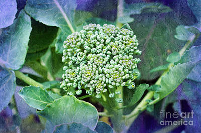 Photograph - Baby Broccoli - Vegetable - Garden 4 by Andee Design