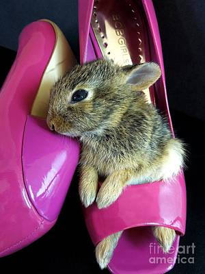Photograph - Baby Bunny In Stilettos by Renee Trenholm