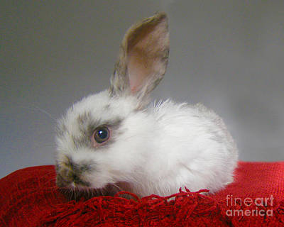 Photograph - Baby Bunny by Terri Waters