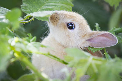 Photograph - Baby Bunny by Windy Corduroy