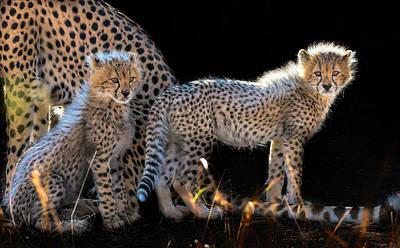 Cheetah Photograph - Baby Cheetahs by Jun Zuo
