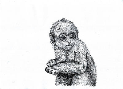 Drawing - Baby Chimp by Karl Addison