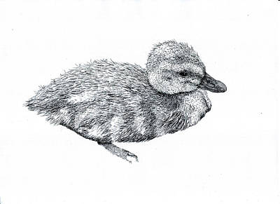 Drawing - Baby Duck by Karl Addison