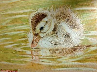 Baby Mallards Drawing - Baby Duck On Pond by Sara DeForge