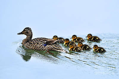 Baby Ducks Follow Art Print