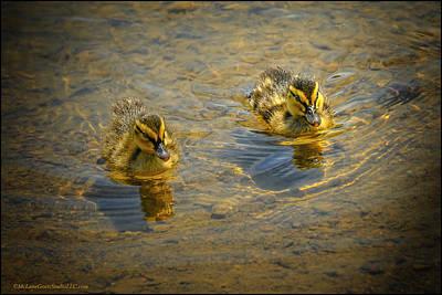 Photograph - Baby Ducks by LeeAnn McLaneGoetz McLaneGoetzStudioLLCcom