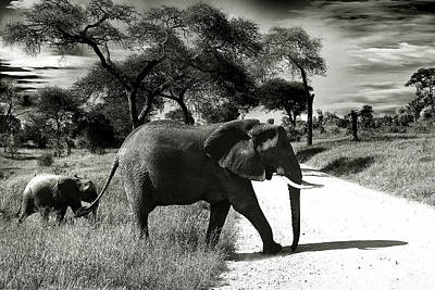 Photograph - Baby Elefant With Mom by Christine Sponchia