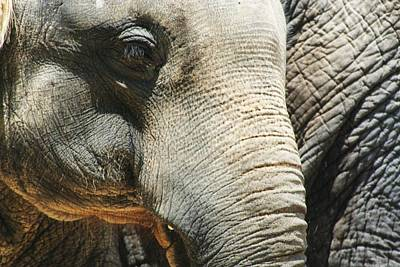 Easter Egg Hunt Rights Managed Images - Baby Elephant Royalty-Free Image by Christopher Hoffman