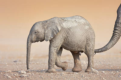 Active Photograph - Baby Elephant  by Johan Swanepoel