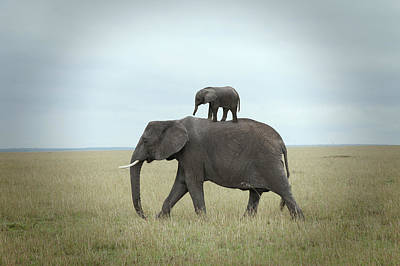 Baby Elephant On The Back Of His Mother Art Print by Buena Vista Images