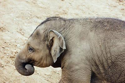 Baby Elephant Art Print by Pati Photography