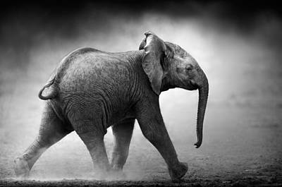 Animals Photos - Baby Elephant running by Johan Swanepoel
