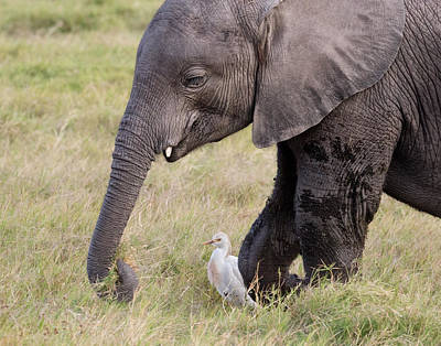 Photograph - Baby Ellie And Egret by June Jacobsen
