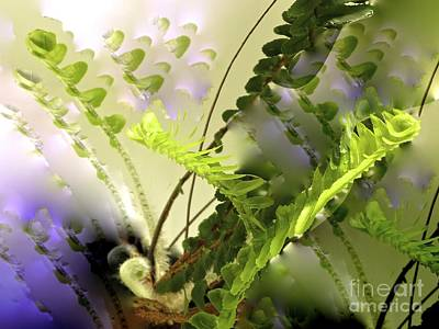 Photograph - Baby Ferns Unfurling For Jim by Phyllis Kaltenbach