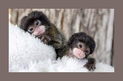 Baby Finger Monkeys Grey Border Art Print by L Brown
