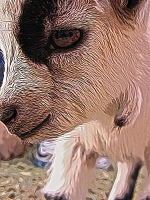 Cattle Dog Digital Art - Baby Goat by Jen  Brooks Art
