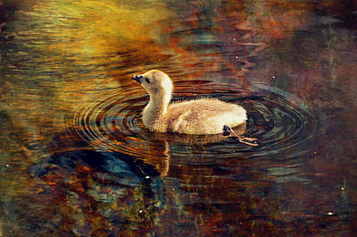 Canadian Geese Digital Art - Baby Goose by Maria Angelica Maira