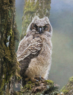 Photograph - Baby Great Horned Owl by Angie Vogel