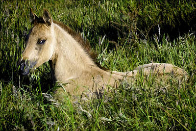 Winter Animals Rights Managed Images - Baby Horse in field Royalty-Free Image by Jacque The Muse Photography
