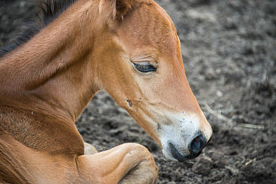 Photograph - Baby Horse by Joye Ardyn Durham