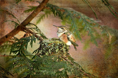 Photograph - Baby Hummingbird In The Forest by Peggy Collins