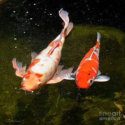Photograph - Baby Koi Makes An Appearance by Susan Wiedmann