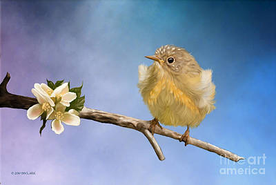 Warbler Painting - Baby O Baby by Beve Brown-Clark Photography