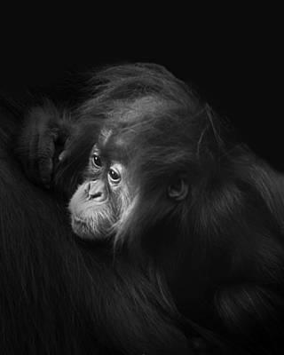 Photograph - Baby Orangutan by Gigi Ebert