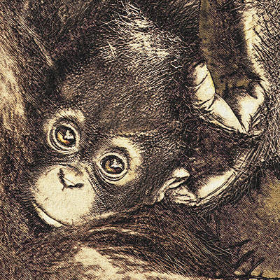 Digital Art - Baby Orangutan by Jane Schnetlage