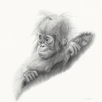 Baby Orangutan Drawing - Baby Orangutan by Sandra Weiner