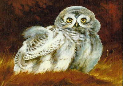 Painting - Baby Owl by Richard Hinger